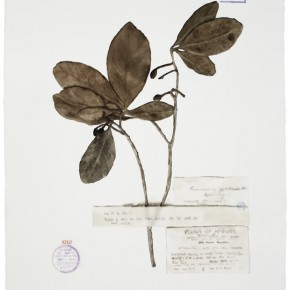 Guo Hongwei, Plant No. 6, 2012; Watercolor on paper, 30 × 21 in