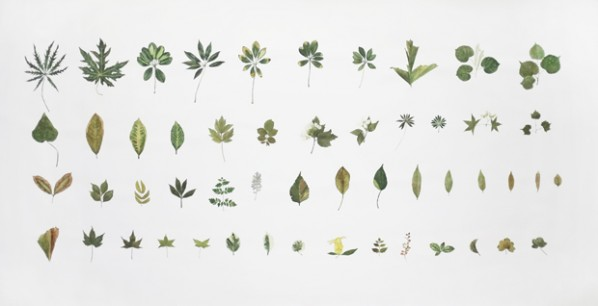 Plant No.10, 2012; watercolor on paper, 150×300cm