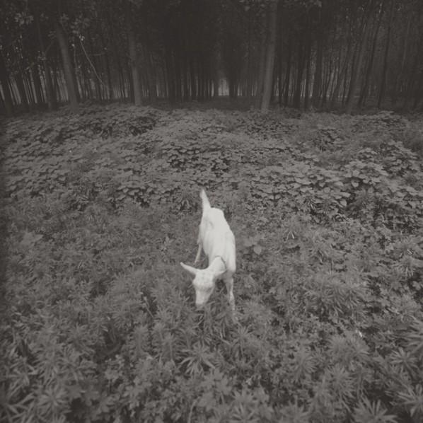 """Taca Sui, """"Lamb"""", 2011; Platinum Print, 20x20cm, Edition of 6"""