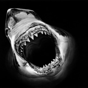 Robert Longo Shark 2013 inkject printing 147x224cm 290x290 - Darkness Visible: Group Show of Ten Artists from China and US to be Exhibited at the National Art Museum of China