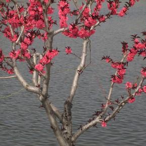 Wang Chuan Blossom 40x30cm 290x290 - Wang Chuan: Colorful Solo Exhibit at Pékin Fine Arts Beijing