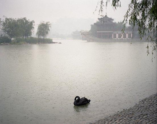 """Shen Wei, """"Swan"""", Xi'an Shananxi Province, 2009, c-print, 40.6 × 50.8 cm"""