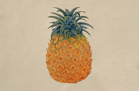 "Lai Jinna, ""Pineapple"", ball-point pen on paper, 48 x 60 cm, 2010"