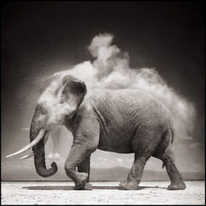 13 Nick Brandt Elephant with Exploding Dust Amboseli 2004 pigment print 22 x 28 inch Ed.of 20 Courtesy of ATLAS Gallery London 290x290 - Press Conference of Photo Shanghai 2014 Held in Beijing