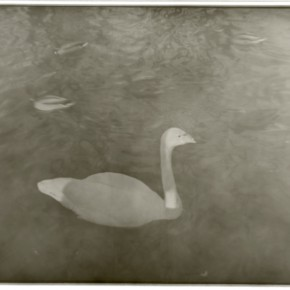 "Lu Yanpeng Swan 290x290 - Photography of Lu Yanpeng to be featured in ""Sense of Presence"" at See+ Gallery"