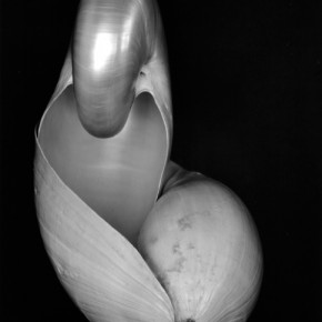 Edward Weston Double Snails 1927 18.5x23.7cm 290x290 - Journey of the Heart: Exhibition of Straight Photography Original Print 1839-2014 Presented by the National Art Museum of China