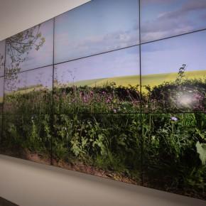 35 Video installations by David Hockney 290x290 - iPad drawings and video installations by David Hockney stir the spring of Beijing