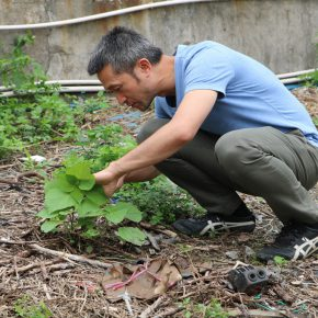 """Project of Zheng Bo Wei Zhijiao Participants Weed Commons 02 290x290 - Guangdong Times Museum presents """"Zheng Bo + Wei Zhijiao + Participants: Weed Commons"""""""