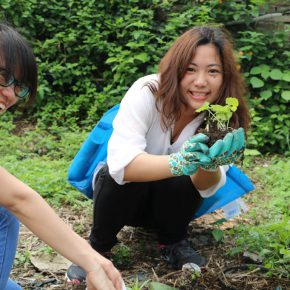 """Project of Zheng Bo Wei Zhijiao Participants Weed Commons 03 290x290 - Guangdong Times Museum presents """"Zheng Bo + Wei Zhijiao + Participants: Weed Commons"""""""