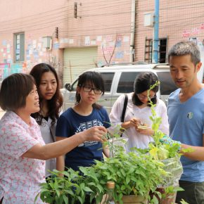 """Project of Zheng Bo Wei Zhijiao Participants Weed Commons 04 290x290 - Guangdong Times Museum presents """"Zheng Bo + Wei Zhijiao + Participants: Weed Commons"""""""