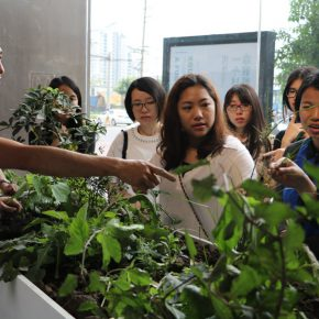 """Project of Zheng Bo Wei Zhijiao Participants Weed Commons 07 290x290 - Guangdong Times Museum presents """"Zheng Bo + Wei Zhijiao + Participants: Weed Commons"""""""