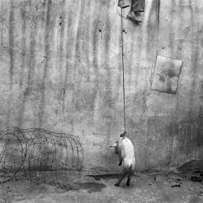 "27 Hanging Pig 2001 290x290 - CAFA Art Museum presents ""Roger Ballen: Theater of the Absurd"" featuring his photographic work"