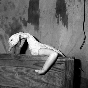 32 One Arm Goose 2004 290x290 - CAFA Interview丨Roger Ballen: My Photography is Unique