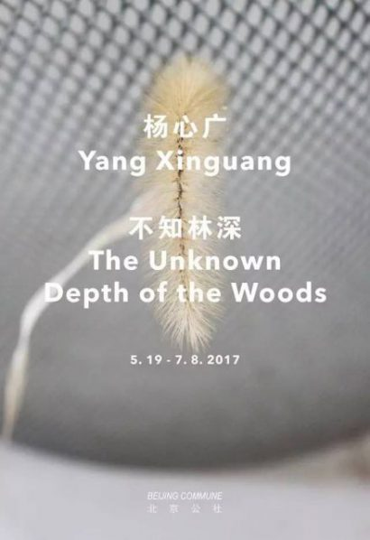 00 Poster of Yang Xinguang The Unknown Depth of the Woods