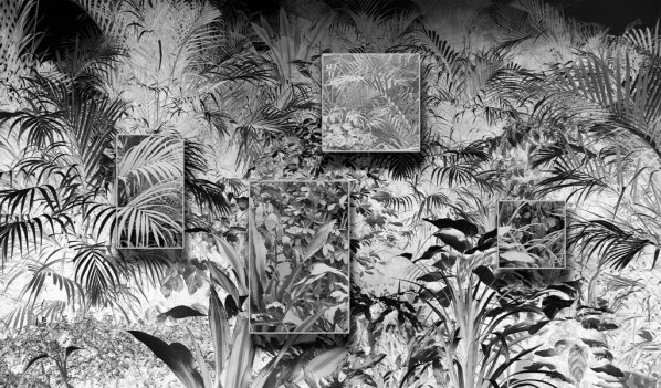 Ji Zhou, Plants Covered in Dust Wallpaper, Archival pigment print, 353x602cm, 2017