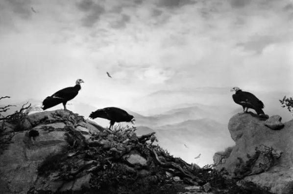 California Condor | 2012