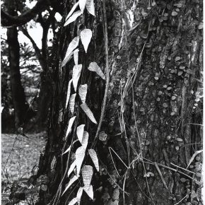 "Simryn Gill Forest 16 1996 1008 gelatin silver print 290x290 - M+ announces ""In Search of Southeast Asia"" featuring the M+ Collection"