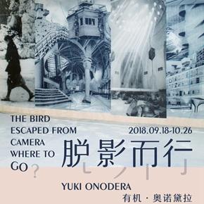 Vanguard Gallery presents Japanese artist Yuki Onodera's solo exhibition in Shanghai