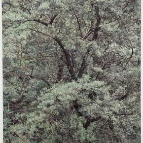 Shi Guowei, Flourish Green, 2018; Painting on photograph, 140x111cm